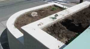Photograph of cement planters with bare soil