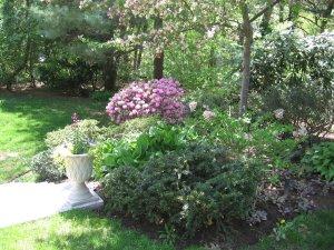 Cecelia's backyard garden