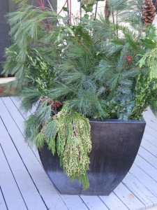 Hoilday Evergreens in Container