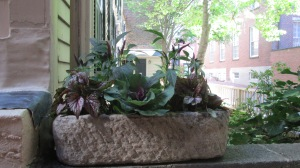 Stone pot arrangement 2015.