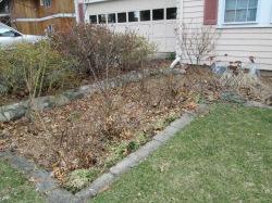 Pruning Roses in Spring