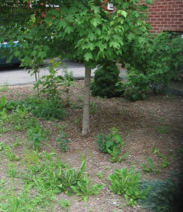 Weeds to be removed naturally